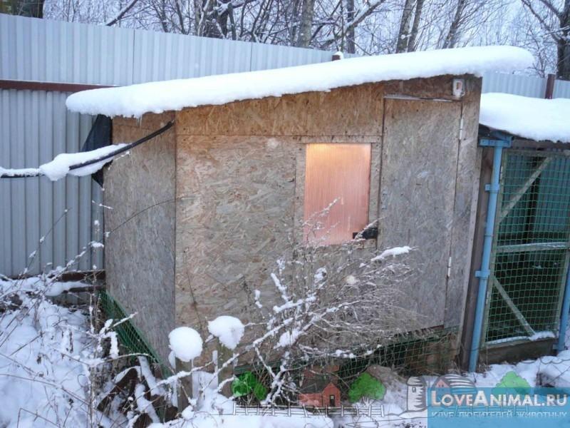 Как построить теплый курятник своими руками на даче фото