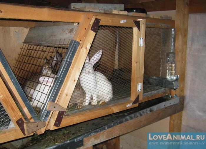 чертеж клетки для кроликов золотухина