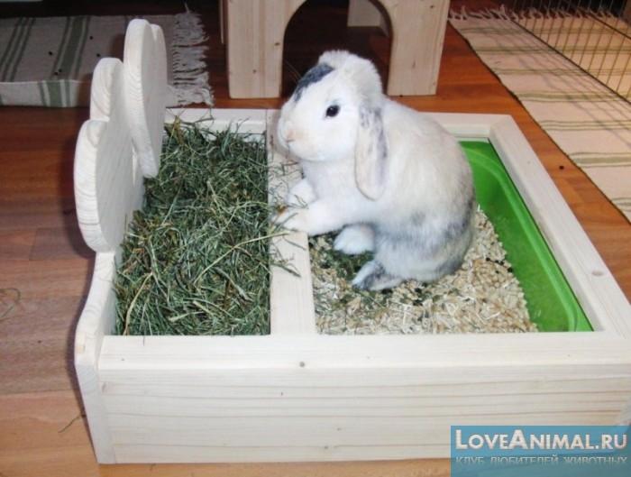 Вольер для декоративного кроликов своими руками
