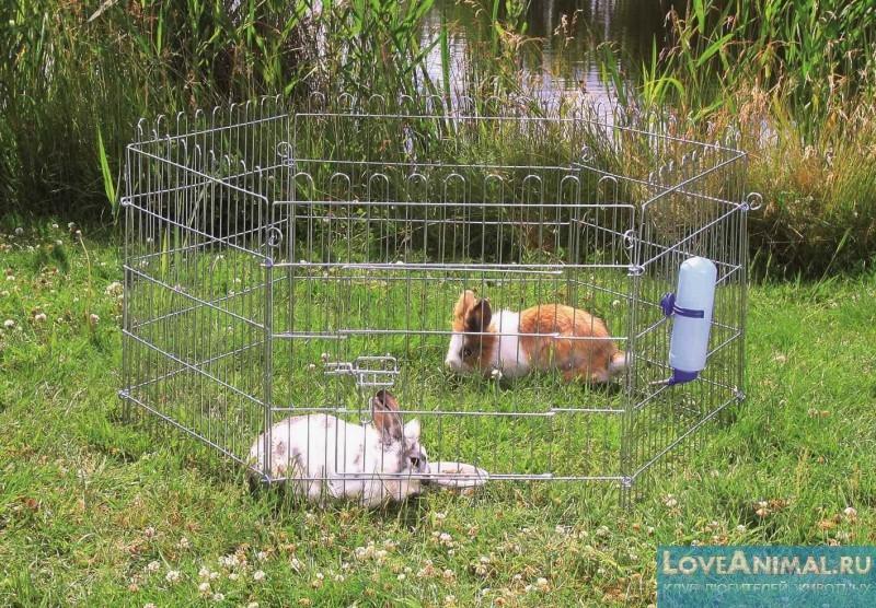 Загоны для кроликов своими руками