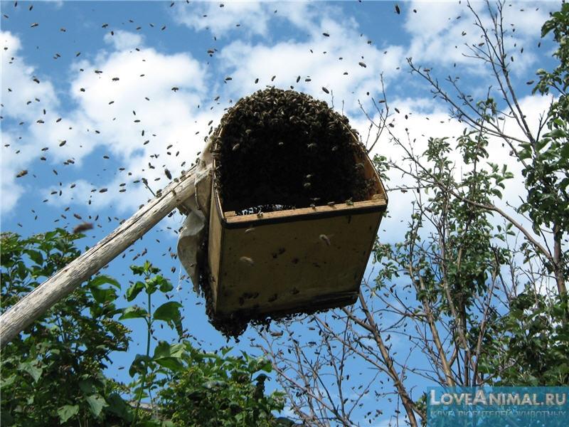 как сделать приманку для пчел