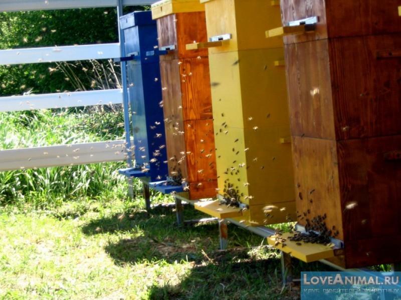 Многокорпусное содержание пчел плюсы и минусы