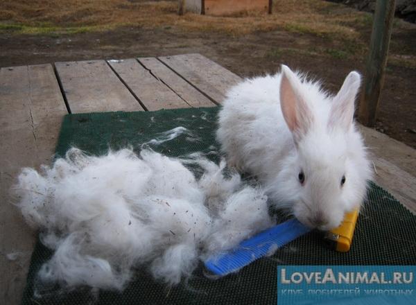 Как сделать кроличий пух