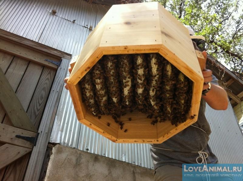 Домик для пчел: как сделать своими руками, чертежи, размеры 58