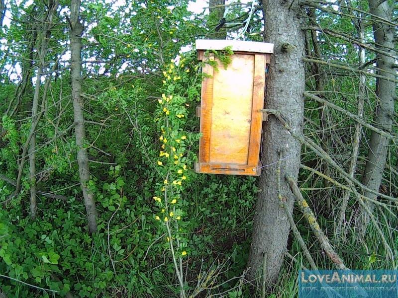 приманки в ловушки для пчел видео