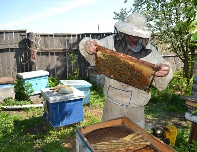 Способы вывода пчелиных маток