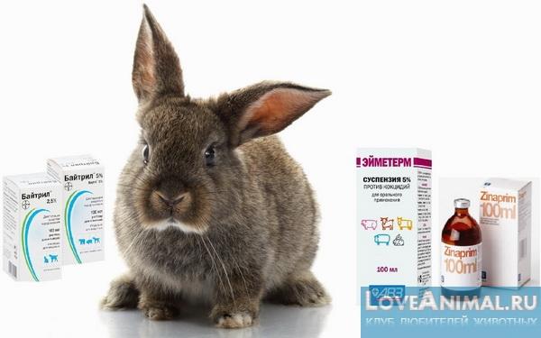 ампролиум для кроликов инструкция по применению