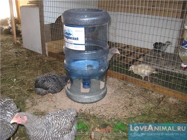 Как сделать цыплятам поилку